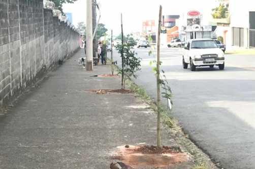 Av. Eduardo Peixoto em Limeira recebe plantio de mudas