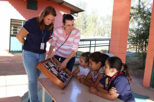 Cerca de 700 espécies de insetos podem ser conferidas em exposição no Zoo de Limeira