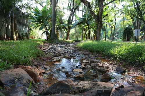 Prefeitura de Limeira desobstrui curso da nascente do Bosque Prefeita Maria Thereza