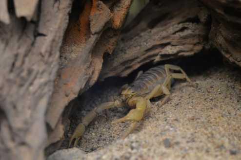 Condomínios devem fazer vistoria e limpeza para evitar escorpiões