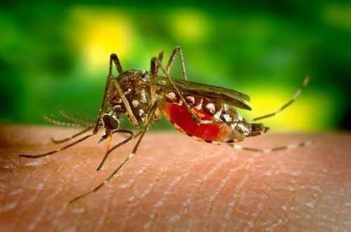 Velha conhecida da população, dengue também é uma preocupação!
