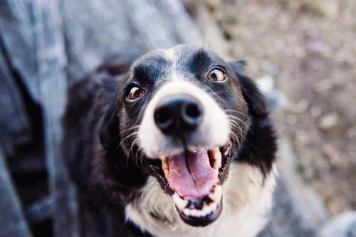 Sebrae apresenta primeiro programa exclusivo para o setor Pet Vet