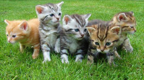 Gatos filhotes estarão disponíveis para adoção na 100% Pet neste sábado