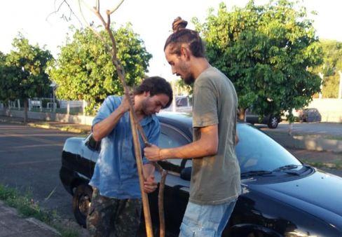 Voluntários contribuem com arborização urbana em Limeira