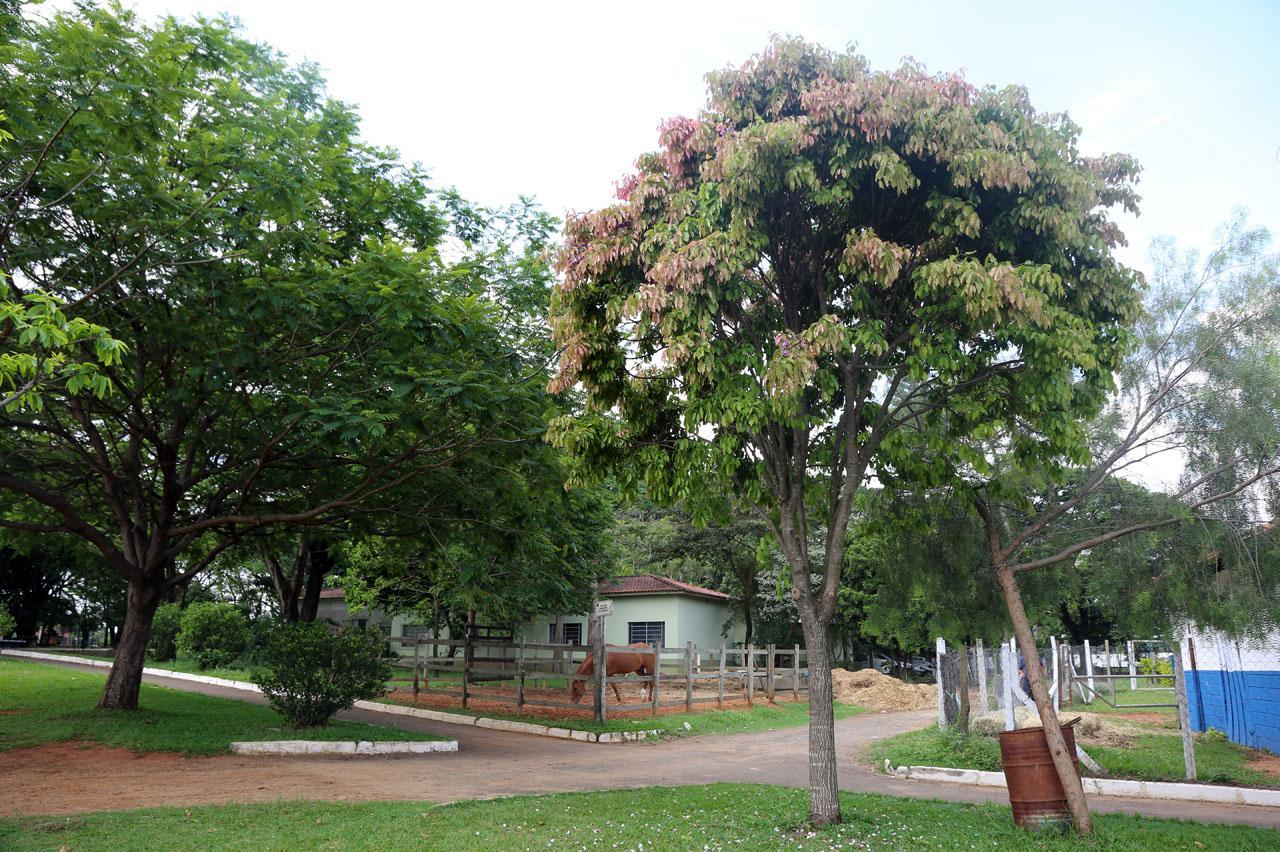 Pela primeira vez, folhas de Sapucaia do Parque Cidade em Limeira adquirem cor rosa