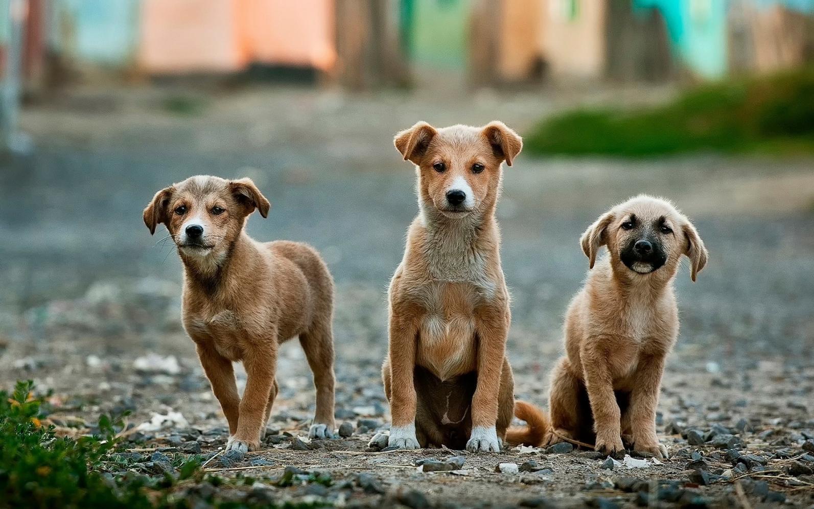 Feira de Adoção de Animais acontece neste sábado em Limeira