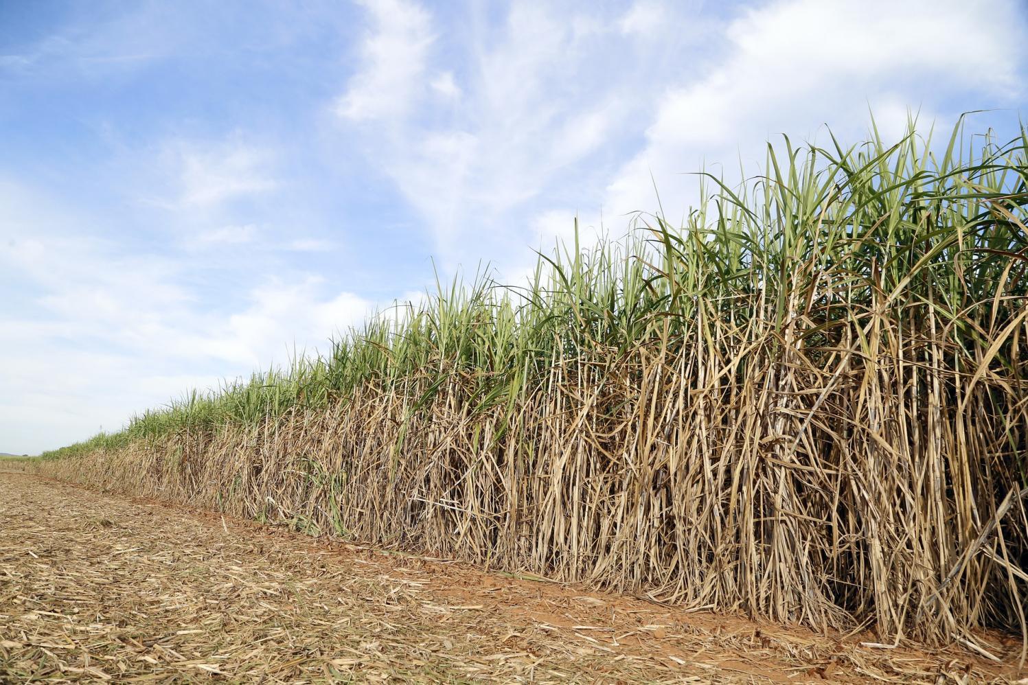 Preços agropecuários iniciam agosto em queda