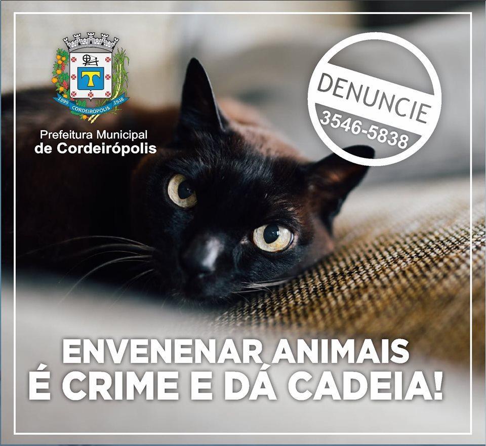 Envenenar animais é crime e dá cadeia!