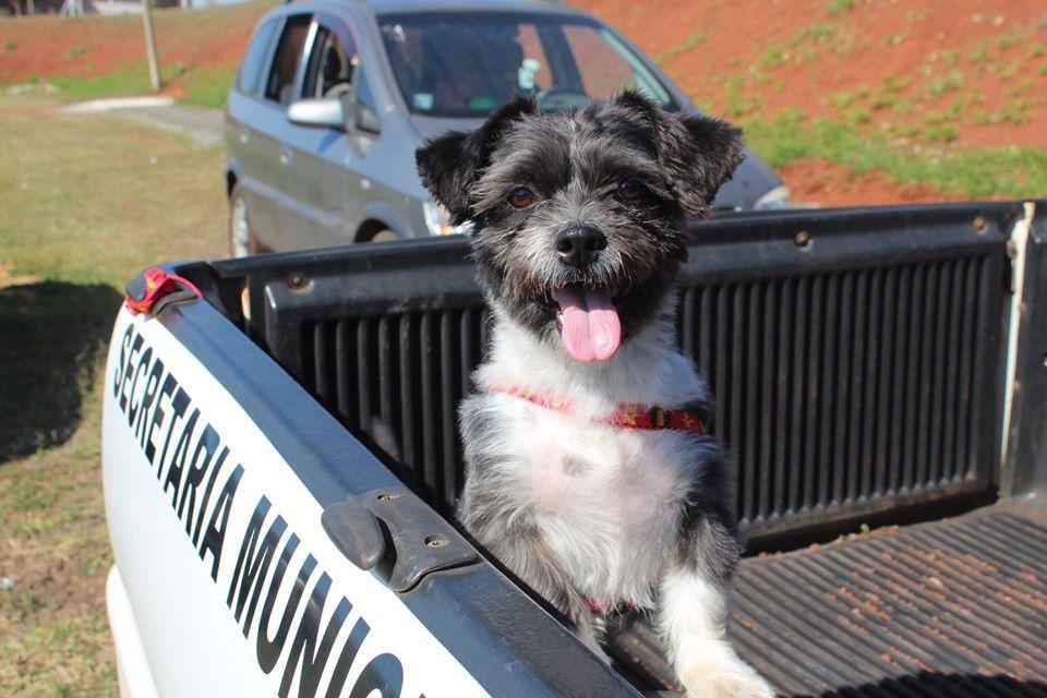 Prefeitura divulga balanço das ações da Coordenadoria de Bem-Estar Animal