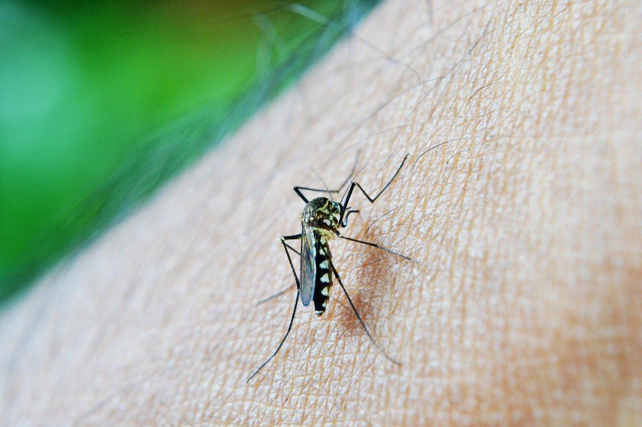 Médica alerta sobre combate ao mosquito da dengue