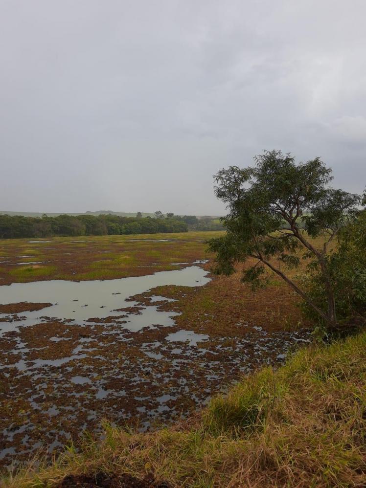 Defesa Civil realiza remoção de aguapés na represa Água Branca em Cordeirópolis