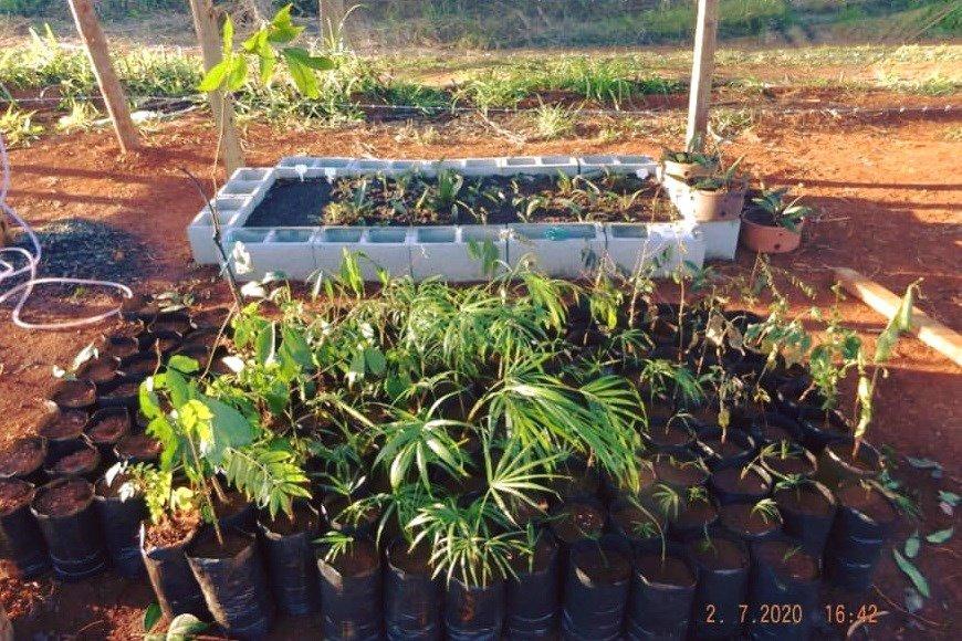 Palmeira Jussara está entre as surpresas do estudo ambiental sobre a flora local