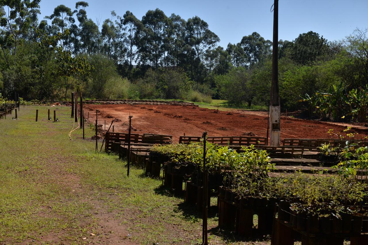 Novo viveiro e estufa darão suporte a projeto de preservação do Tabajara