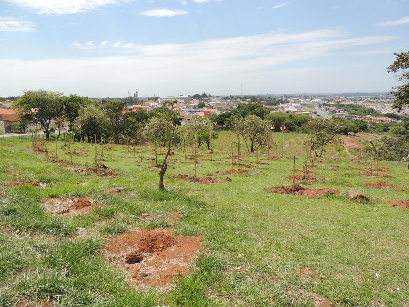 ACIL realiza plantio de 50 mudas em área verde de Limeira