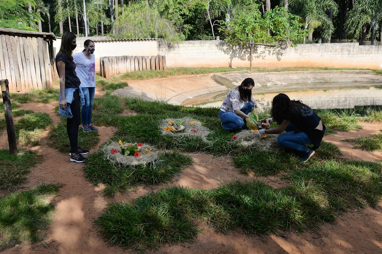 Zoo de Limeira realiza enriquecimento ambiental em recinto de animal com risco de extinção