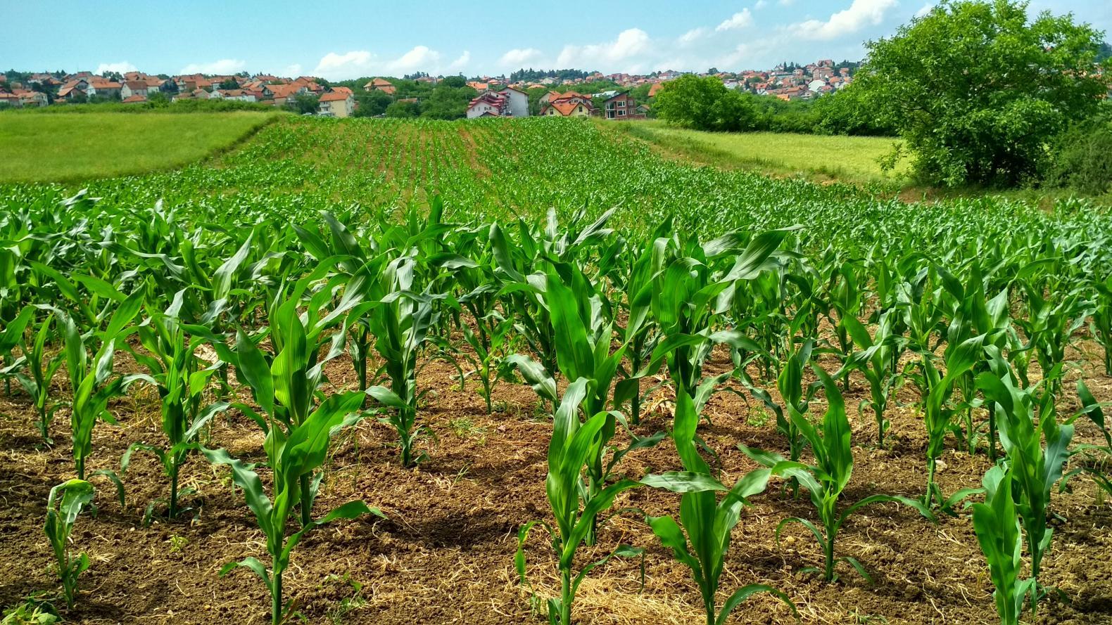 Empresários do agronegócio estão confiantes no desempenho do setor nos próximos três anos