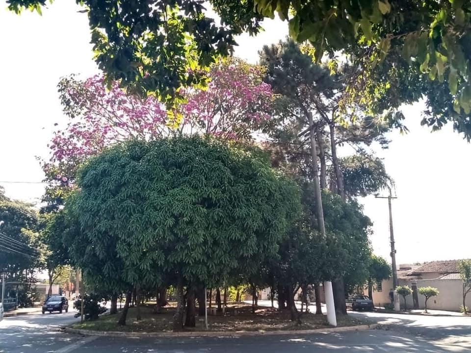 Você conhece a Floresta Urbana de Cordeirópolis?