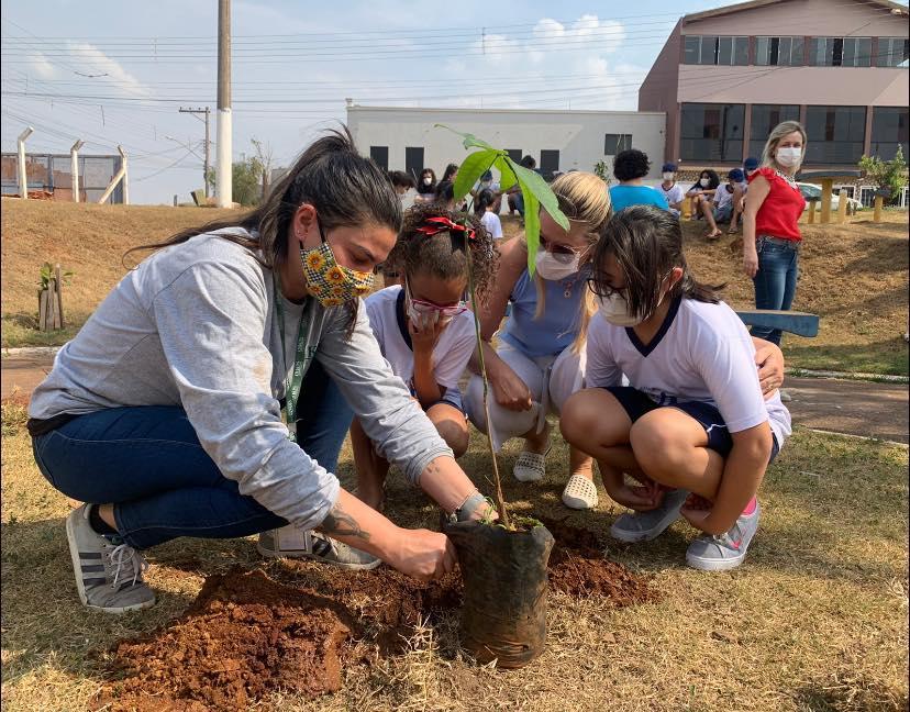 Dia da Árvore: A esperança irá germinar como uma planta!