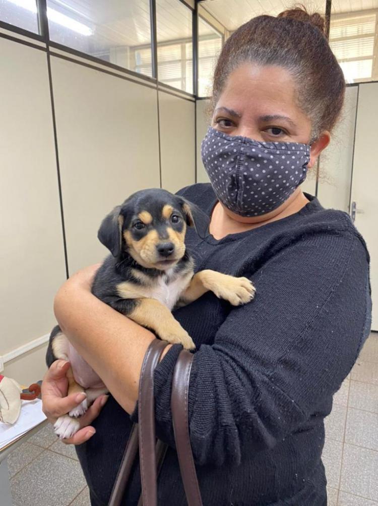 Bem-Estar Animal auxiliou mais de 800 animais neste ano